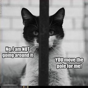 No, I am NOT going around it