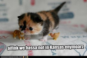 aifink we hassa not in Kansas enymoarz