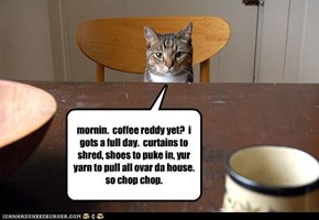 mornin.  coffee reddy yet?  i gots a full day.  curtains to shred, shoes to puke in, yur yarn to pull all ovar da house.  so chop chop.