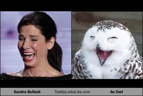 Sandra Bullock Totally Looks Like An Owl