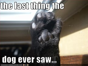 the last thing the   dog ever saw...