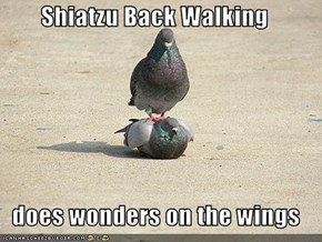Shiatzu Back Walking   does wonders on the wings