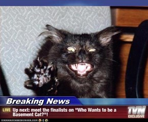 "Breaking News - Up next: meet the finalists on ""Who Wants to be a Basement Cat?""!"