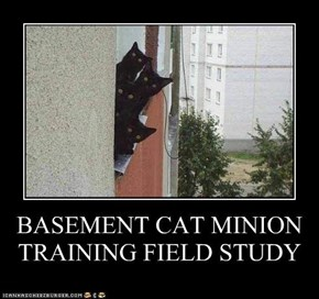 BASEMENT CAT MINION TRAINING FIELD STUDY
