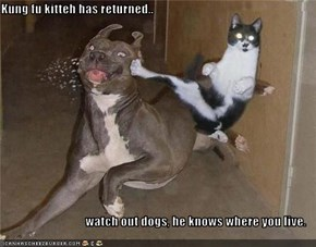 Kung fu kitteh has returned..  watch out dogs, he knows where you live.