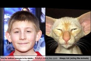Eric Per Sullivan (Malcolm in the Middle) Totally Looks Like Sleepy Cat (Acting like Animals)