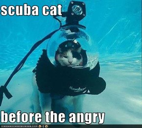 scuba cat  before the angry