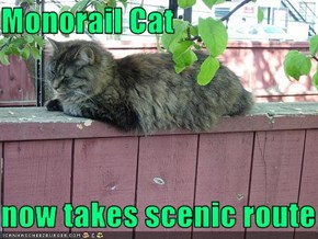 Monorail Cat  now takes scenic route