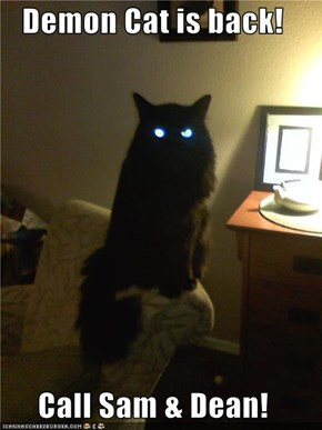Demon Cat is back!  Call Sam & Dean!