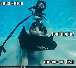 aqua kitten  looking for  ilusive cat fish