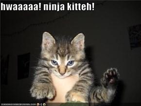 hwaaaaa! ninja kitteh!