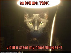 so tell me, 'Fido',  y did u steel my cheezburger?!
