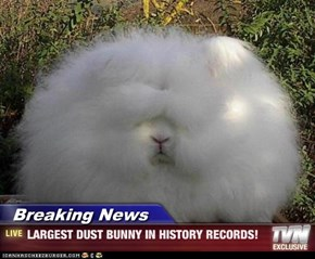 Breaking News - LARGEST DUST BUNNY IN HISTORY RECORDS!