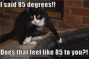 I said 85 degrees!!  Does that feel like 85 to you?!
