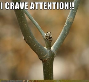 I CRAVE ATTENTION!!