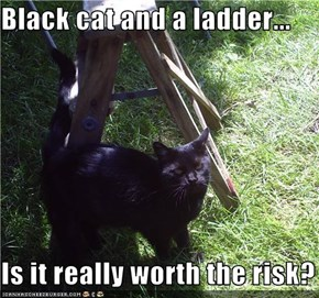 Black cat and a ladder...  Is it really worth the risk?