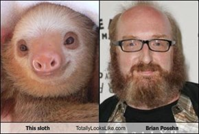 This sloth Totally Looks Like Brian Posehn