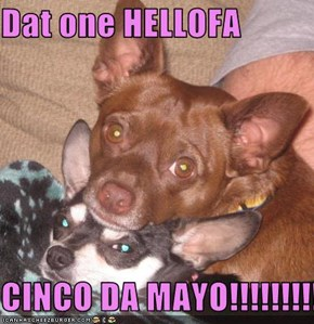 Dat one HELLOFA  CINCO DA MAYO!!!!!!!!!1