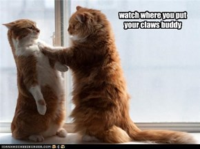 watch where you put your claws buddy