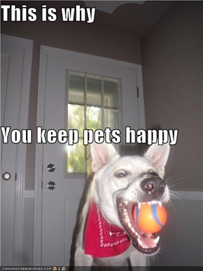 This is why You keep pets happy