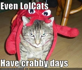 Even LolCats  Have crabby days