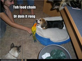 Teh food chain  Ur doin it rong