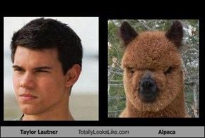Taylor Lautner Totally Looks Like Alpaca