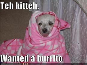 Teh kitteh,  Wanted a burrito