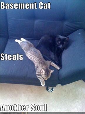 Basement Cat Steals Another Soul