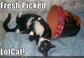 Fresh Picked  LolCat!
