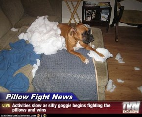 Pillow Fight News - Activities slow as silly goggie begins fighting the pillows and wins