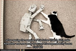 after seeing the remains of his father (Darth Kat), Luke Katwalker was now ready to accept his responseabilty's as a Jedi Kat