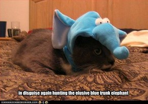 in disguise again hunting the elusive blue trunk elephant