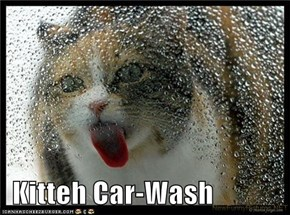 Kitteh Car-Wash