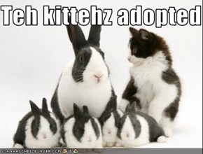 Teh kittehz adopted