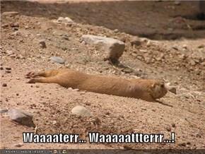 Waaaaterr... Waaaaattterrr...!
