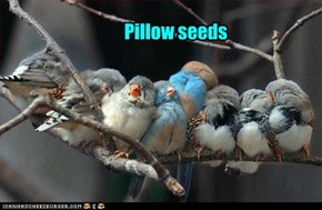 Pillow seeds