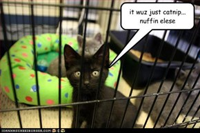 it wuz just catnip... nuffin elese