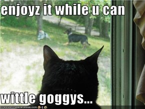 enjoyz it while u can  wittle goggys...