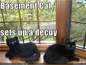 Basement Cat sets up a decoy