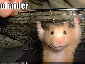 ohaider