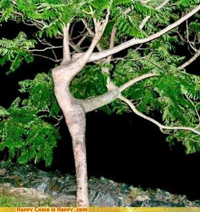 Dancing Tree Is a Dancing Queen