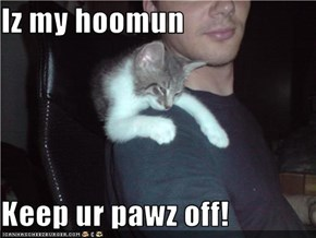Iz my hoomun  Keep ur pawz off!