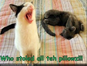 Who stoled all teh pillowz!!!