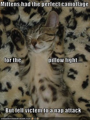 Mittens had the perfect camoflage  for the                       pillow fight.... But fell victem to a nap attack