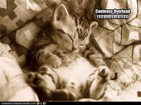 Cootness Overload !1111!!!!!11!!1!11111