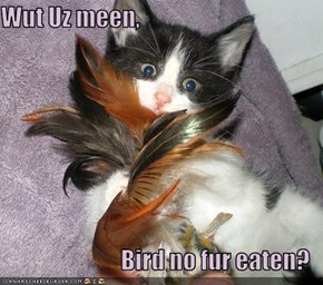 Wut Uz meen,  Bird no fur eaten?