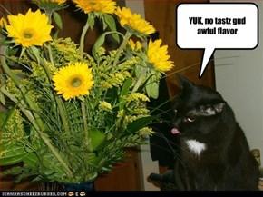 YUK, no tastz gud awful flavor