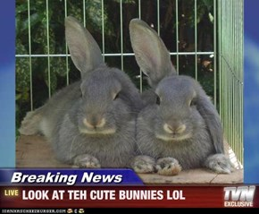 Breaking News - LOOK AT TEH CUTE BUNNIES LOL
