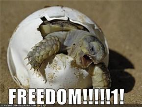 FREEDOM!!!!!1!